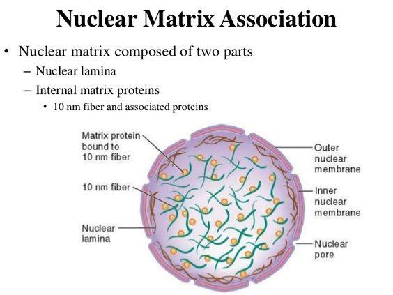 mitochondria y cloroplasto pdf free