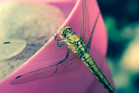 Beautiful dragonfly so hard to get a photo of you guys