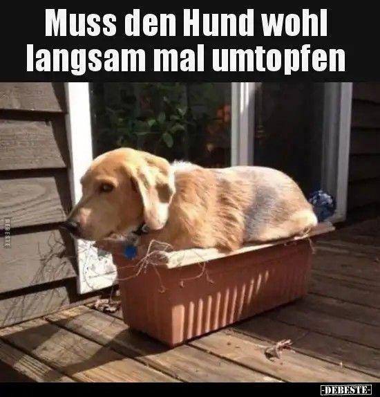 Hundeschule Ehralessien Unsere Philosophie