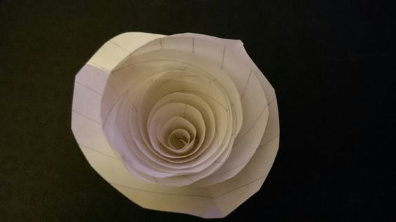 Hand rolled rose