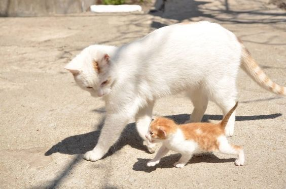 Cat And Its Kitten Going For A Walk Mama Cat Cats Cute Animals