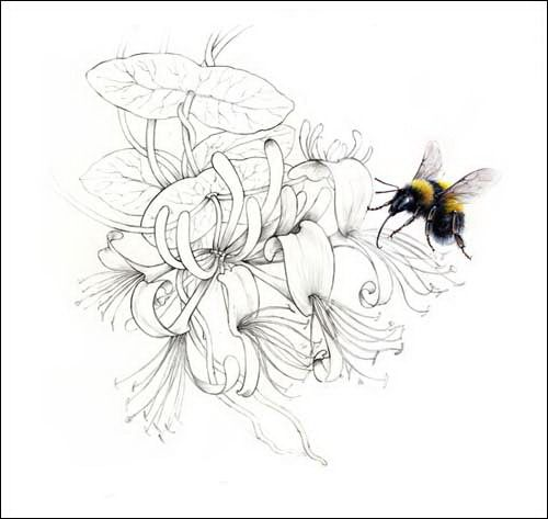 honeysuckle and honey bee tattoo i 39 m sure this is meant to be colored in but i love the. Black Bedroom Furniture Sets. Home Design Ideas