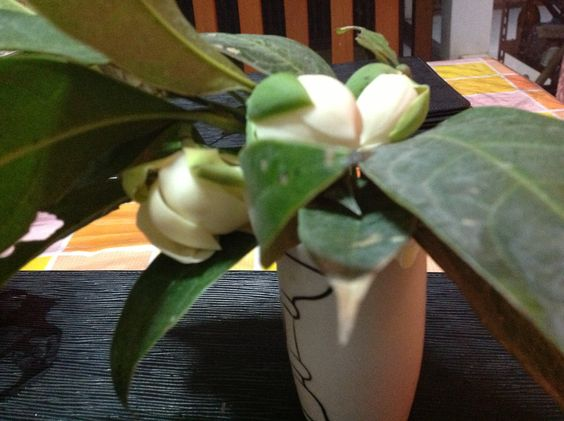 Another fragrant flower from the garden