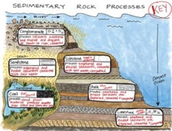 Sedimentary Rock Processes Interactive Notebook Foldable! students love this!