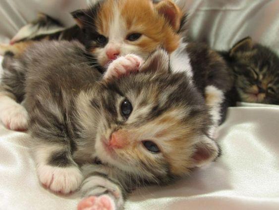 klein bunt und h bsch dreifarbige katzenbabys seite 1 katzen pinterest. Black Bedroom Furniture Sets. Home Design Ideas