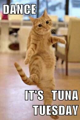 .Dance... It's Tuna Tuesday #lolcats funny cats: