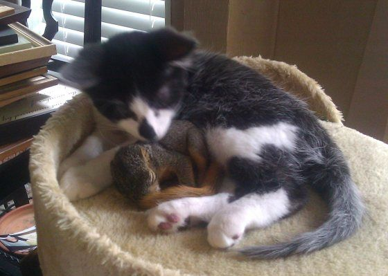 """""""this little squirrel keeps coming in through the doggy door to hang out with my cat."""" That's just so sweet"""