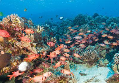 Ulua Beach, Wailea - snorkeling maui, soldier fish, underwater adventure, island reefs