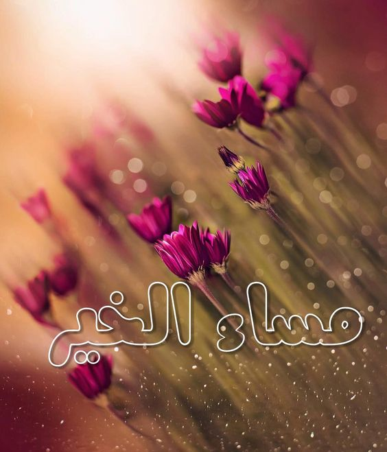 مساء الخير Good Morning Wallpaper Flower Phone Wallpaper Beautiful Flowers Wallpapers