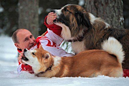 モスクワ郊外で、雪の上に寝そべりながら愛犬とじゃれ合うプーチン大統領。2012年7月に秋田県から贈られた秋田犬「ゆめ」(手前)もすっかり懐いた。普段は厳しい表情の大統領もリラックスした様子。 (2013年04月10日 配信)  【EPA=時事】