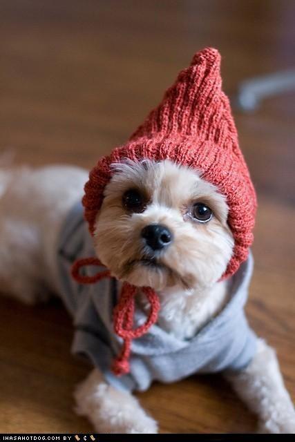 gnome doggie