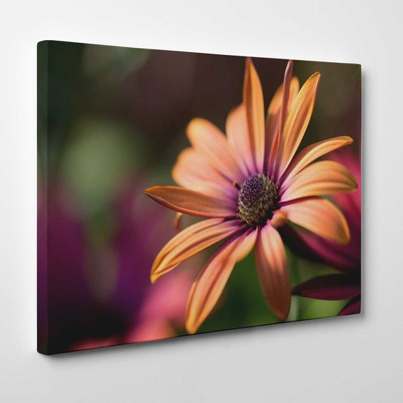 Canvasprints.io | Hot Pink Gerber Daisy - #canvasprintsio - Low cost, high quality canvas prints made in London UK from just £13.99. You're sure to find inspiration in our collection. Ask about our photo to canvas option too, it's super simple. Canvas prints on wall / flower and floral canvas art
