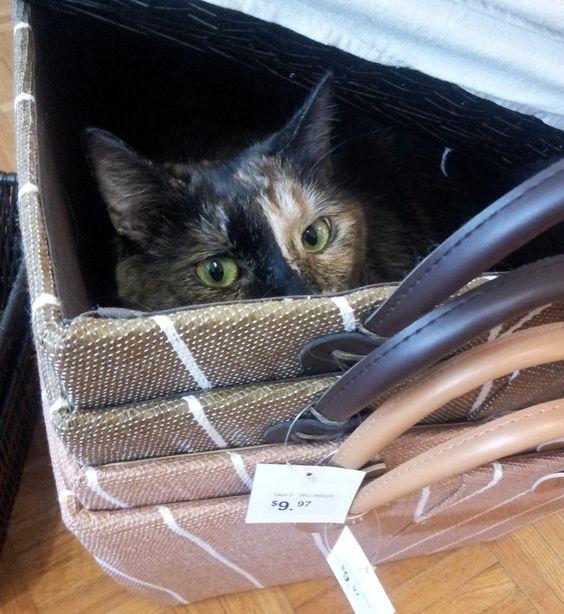 Iris peeking out of a basket.