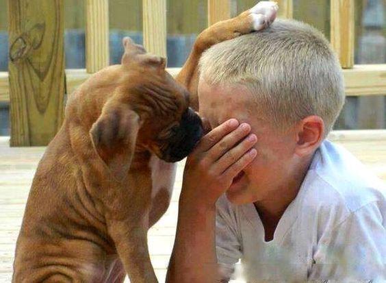 慰める犬と号泣する赤ちゃん