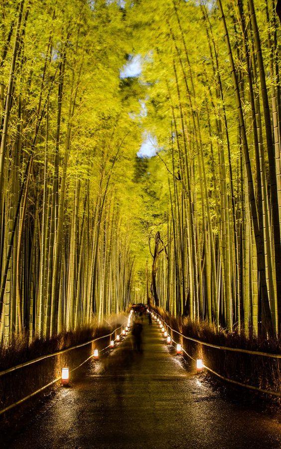 ༺♥༻ Sagano Bamboo Forest (Japan) ༺♥༻