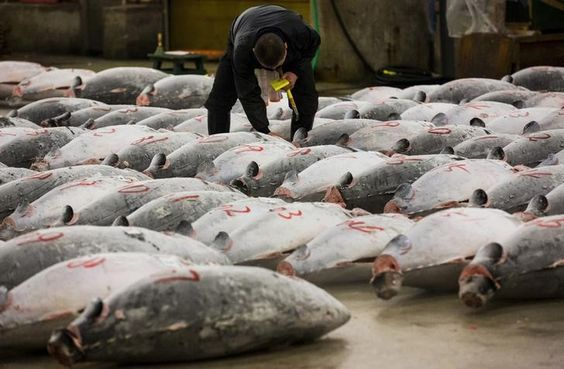 """The amount of fish in the oceans has halved since 1970, in a plunge to the """"brink of collapse"""" caused by over-fishing and other threats, the WWF conservation group said on Wednesday. Populations of some commercial fish stocks, such as a group including tuna, mackerel and bonito, had fallen by almost 75 percent..."""