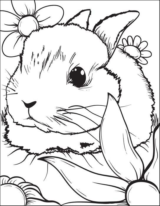 Rabbits Bunny Coloring Pages Animal Coloring Pages Rabbit Colors