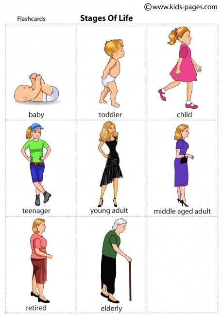 Lifecycle of a human adult female