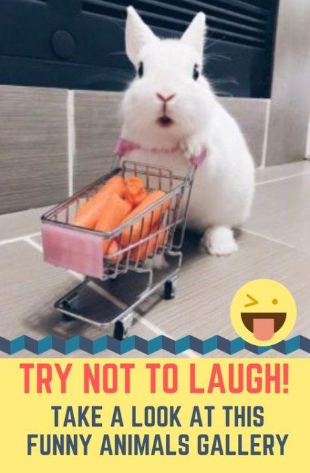 Funny Animals Bunny So Cute 40 Ideas Funny Animals Funny Cartoon Faces Funny Memes About Girls