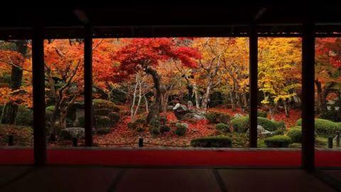 海外の反応 パンドラの憂鬱 海外 日本の紅葉は別格 京都の紅葉フルコース動画が外国人を魅了 美しい風景 景色 紅葉