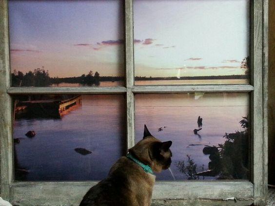 Old window redone.  Ozzie thinks it's a real window!