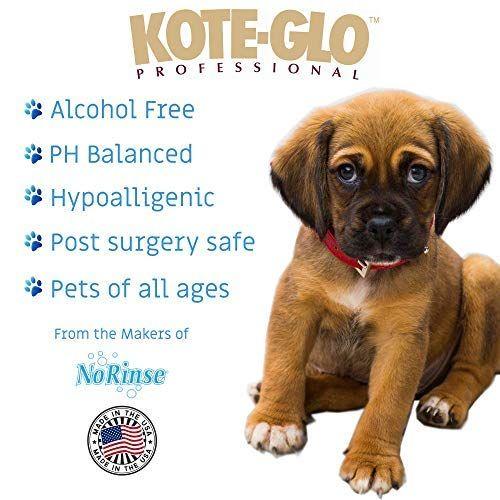 Pet Shampoos Amazon Com Kote Glo No Rinse Dry Waterless Dog
