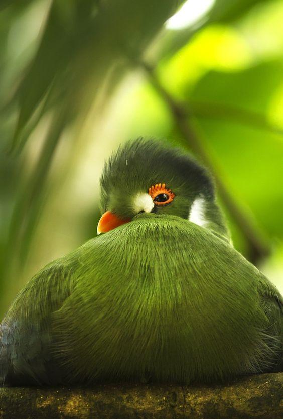 Green bird beauty