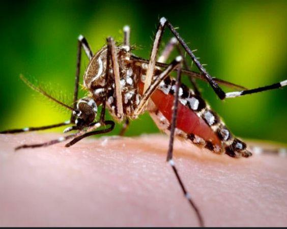 Zika Virus Philippines: Iloilo City Woman Tests Positive - http://www.morningledger.com/zika-virus-philippines-iloilo/1399327/