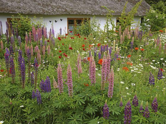 Ogrod Naturalny Rustic Gardens Grandmas Garden Plants