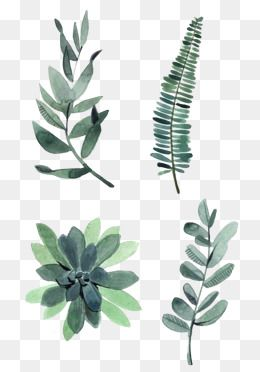 Watercolor Leaves Png Images Vector And Psd Files Free Download On Pngtree Free Watercolor Flowers Flower Drawing Watercolor Leaves