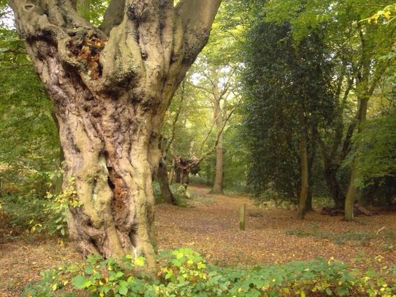 Hainault Forest. The Woodland Trust.