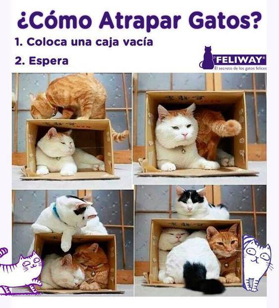 ¿Cómo atrapar gatos?
