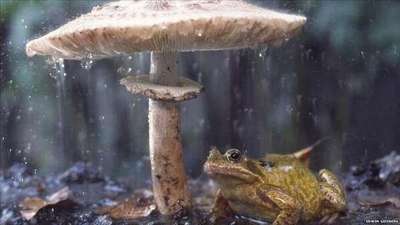 It's a rainy day, alleluia!