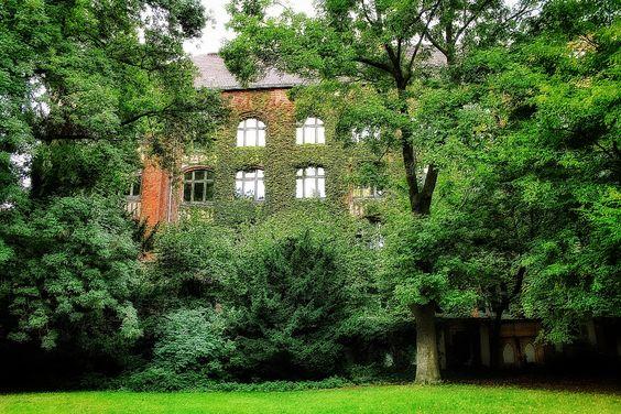 Verwunschene Schule am Bosepark  #myknips #berlin #tempelhof #bosepark #sekundarschule #school #baum #tree #park #verwunschen #enchanted