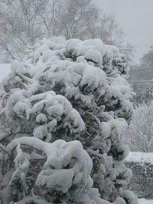 lovely heavy snow