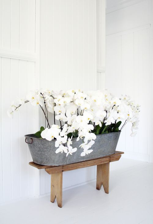 Orchids planted in metal bucket--I have a beautiful bucket that is not being utilized.