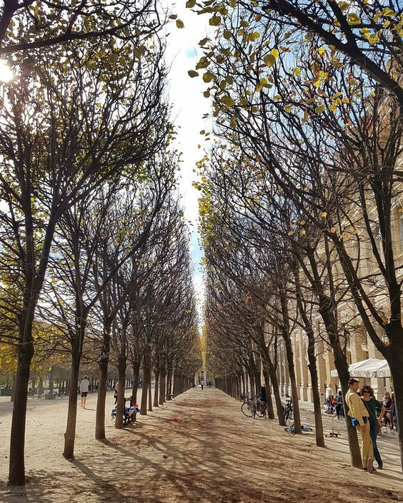 A walkway of trees lines the Jardin du Palais-Royal on a sunny autumn day in Paris.