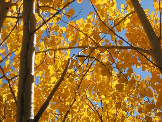Se acerca el otoño