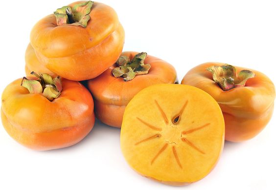 The Tamopan persimmon is a large rare acorn-shaped fruit, its horizontal constriction around the middle contribute to its unusual acorn appearance. Its thick skin is waxy and a pumpkin color tinged with bronze. Once ripe, its flesh is less than overtly juicy, yet succulent and its flavor is reminiscent of mango, pear and date.