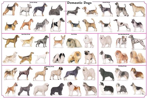 Variation in dogs.