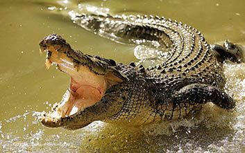Crocodiles to become prison guards in Indonesia