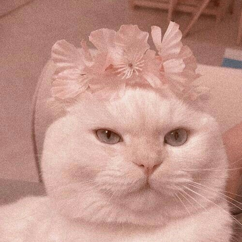 Shared By F E R N A N D A Find Images And Videos About Pink White And Aesthetic On We Heart It The App To Get Lost Cat Aesthetic Cat Icon Cute Baby Cats