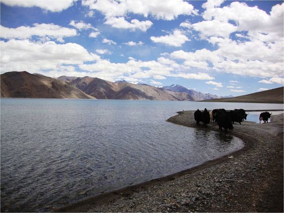 Shepherds and yaks by the Pangong Lake