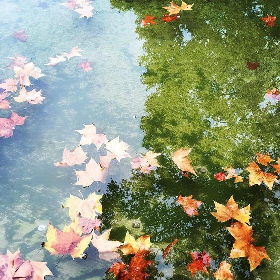 Finalmente autunno! La mia stagione preferita colori stupendi aria frizzante e finalmente il primo freddo! Voi che stagione preferite?  Finalmente el otoño! Mi temporada favorita colores maravillosos aire fresco y por fin el frío! Vosotros qué temporada preferís? #autumn #bcn #domingo #color #iloveautumn