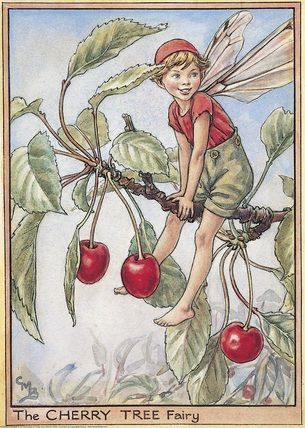 Illustration for the Cherry Tree Fairy from Flower Fairies of the Trees. A boy fairy sits astride the branch of a fruiting cherry tree with his head turned towards the front.  										   																										Author / Illustrator  								Cicely Mary Barker