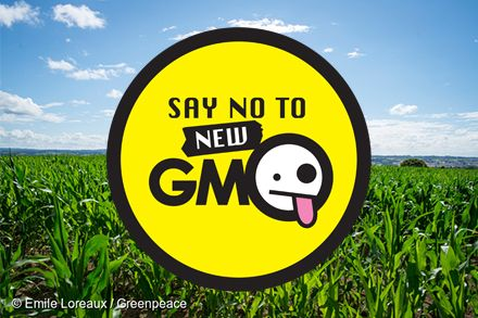 Don't allow GMOs to go untested and unlabelled.  Sign the petition!