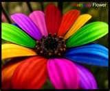 everything rainbows - Bing Images