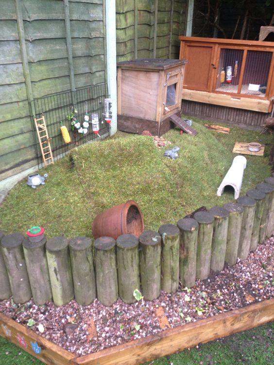 Guinea pig enclosure home hutch area