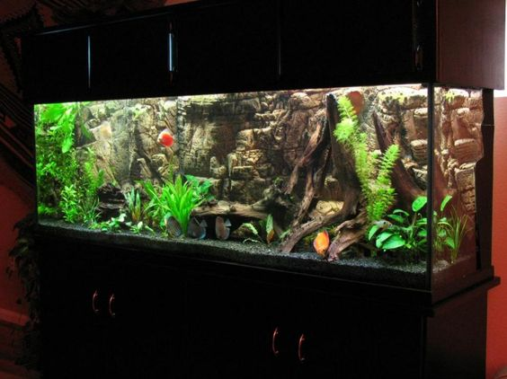 Pinterest the world s catalog of ideas for Fish tank background ideas