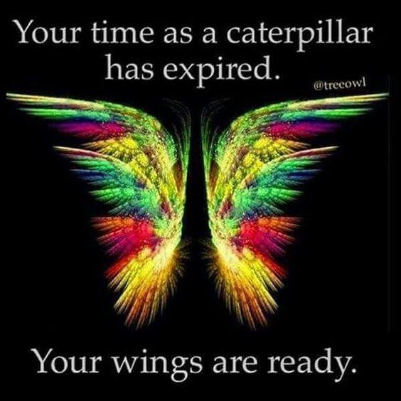 Your wings are ready... WILD WOMAN SISTERHOODॐ #WildWomanSisterhood #feathertribe